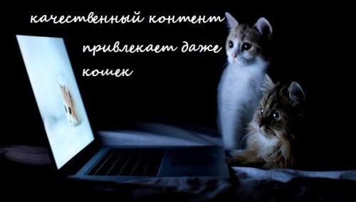 Качественный контент группы Вконтакте